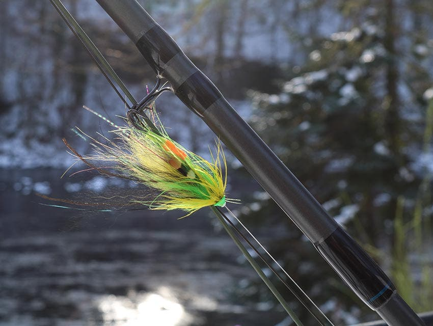 Bright Salmon Flies in the Spring