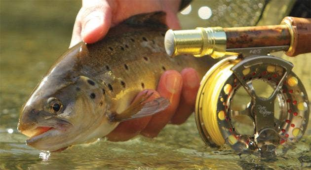 Wychwood River and Stream Tackle