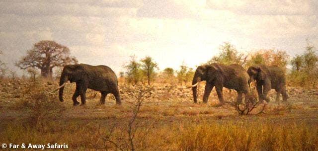 Safari and travel clothing