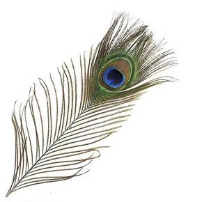 Veniards Peacock Natural Eye