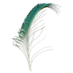 Veniards Peacock Sword Tails