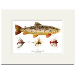 Brown Trout & Flies Signed Fine Art Print by Maria Gonzalez