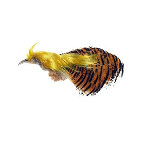 Veniards Golden Pheasant Whole Head Crest and Tippet