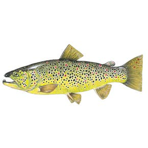 Clare Villar Brown Trout Limited Edition Print