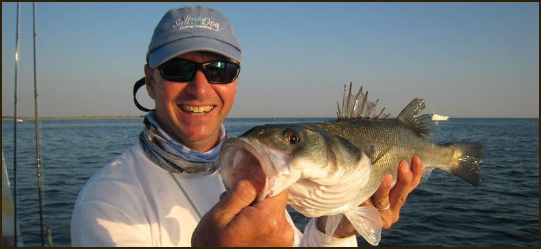 Guided Bass Fishing Days in Chichester Harbour