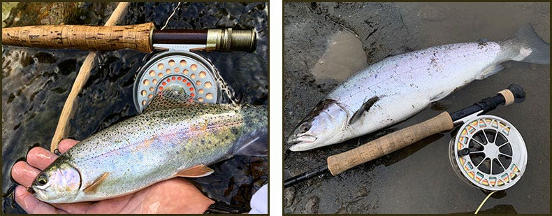 Catches on freshwater single-handed fly rods
