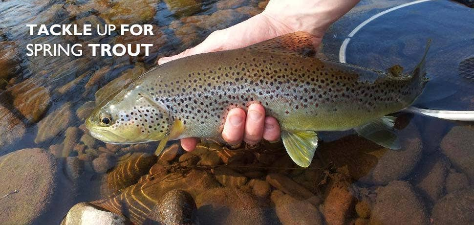 It's Time For Spring Trout