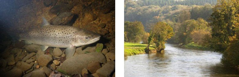 Three-Night Sea Trout Fishing Course on the River Towy